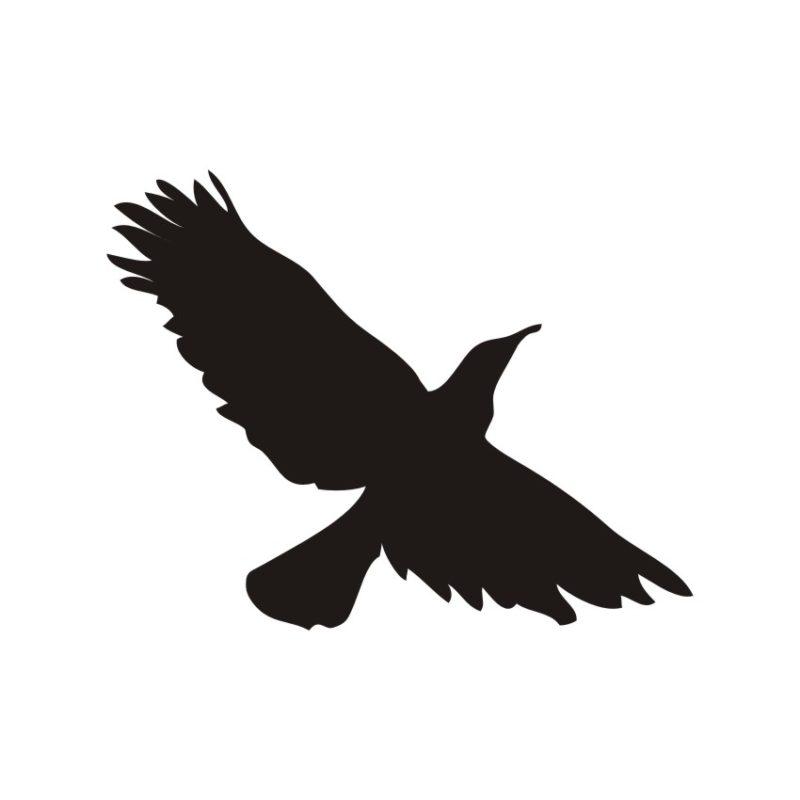 Flying bird vector, Pigeon