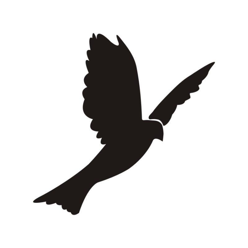 Pigeon Vectors
