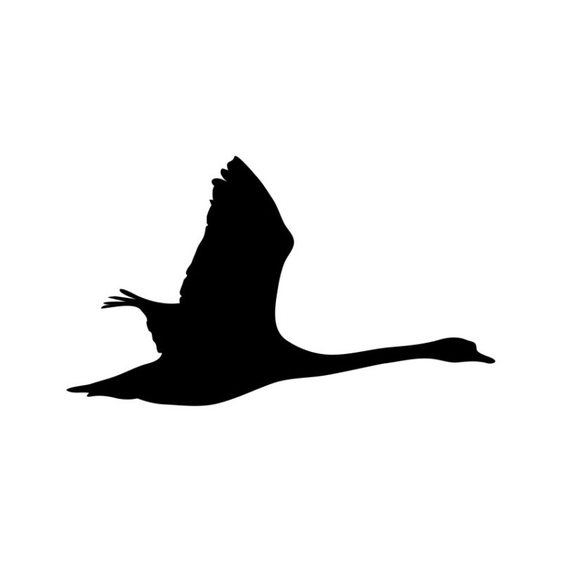 Flying Swan Vector, Flying Swan Vector, Birds Vector, Animals Vector, Flying Flying Swan Vector, Flying Flying Swan Vector, Canyon Vector, Eagle Vector, Swan Vector,