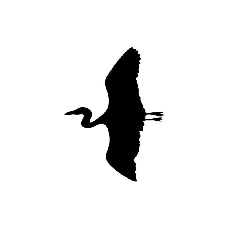 Flying Swan Vector, Flying Swan Vector, Birds Vector, Animals Vector, Flying Flying Swan Vector