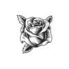 Rose Vector 2