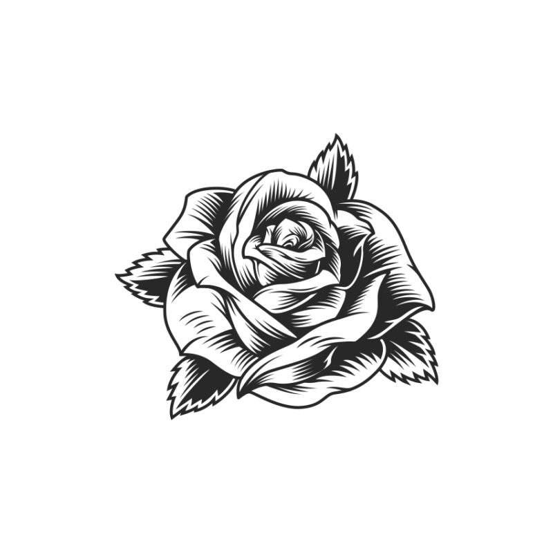 Rose Vector 3